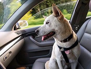 dog-car- BLOGjpg.jpg